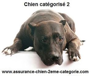 Vaccin antirabique pour les chiens de categorie 2 obligatoire et assurance